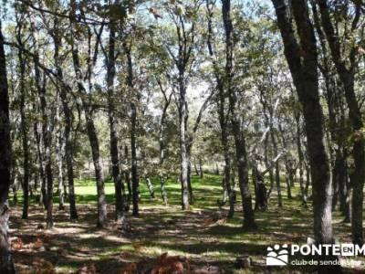 Castañar de la Sierra de San Vicente - Convento del Piélago;senderismo en cercedilla;club escalada